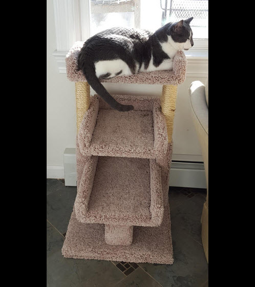 good cat tree for senior cats