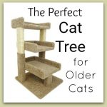 Cat Tree for Cats with Arthritis
