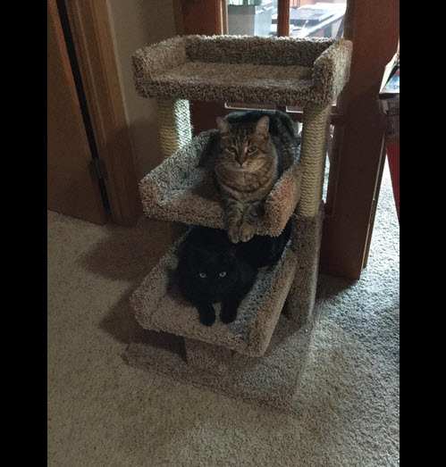 cat tree with large perch